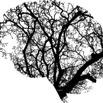 Tu postura corporal es determinante para tu cerebro